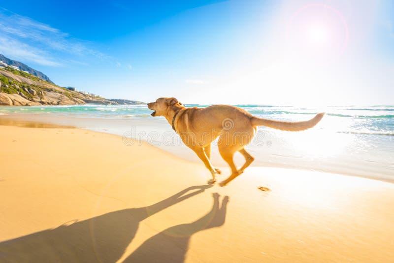 Giochi del cane in acqua fotografie stock libere da diritti