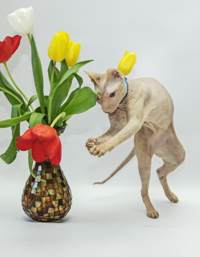 Giochi del gatto con i fiori fotografie stock libere da diritti