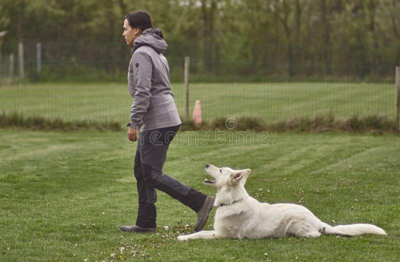 Giochi della ragazza con un cane fotografia stock
