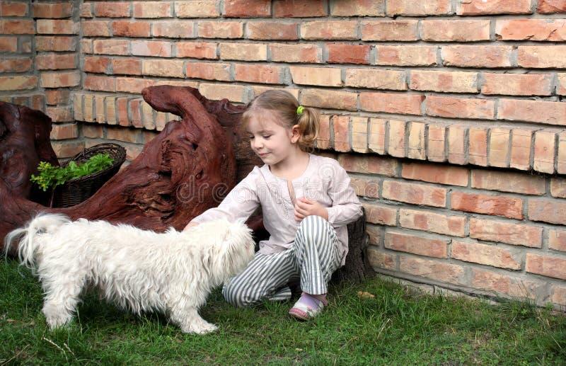 Gioco della bambina di bellezza con il cucciolo maltese fotografie stock
