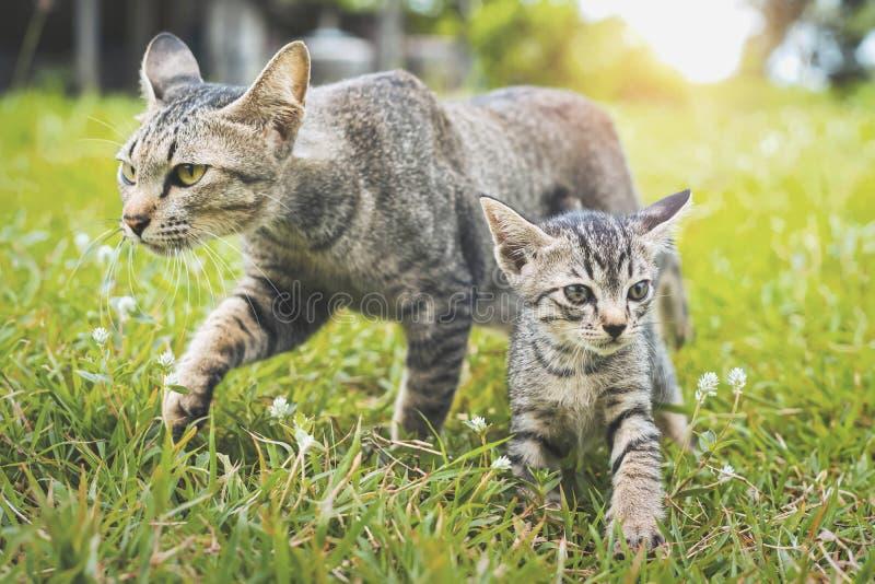 gioco di camminata del gatto sveglio due sull'erba verde fotografie stock libere da diritti