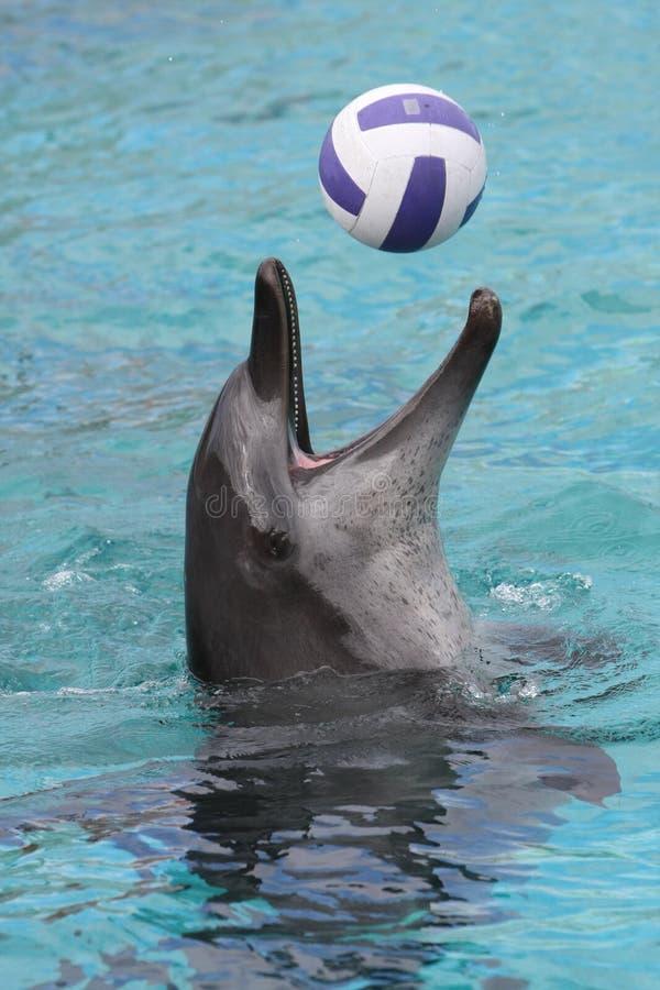 Gioco di sfera del delfino fotografie stock