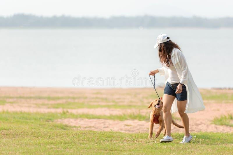 Gioco e funzionamento asiatici della donna di stile di vita con il cane di amicizia di golden retriever nell'alba all'aperto immagini stock libere da diritti
