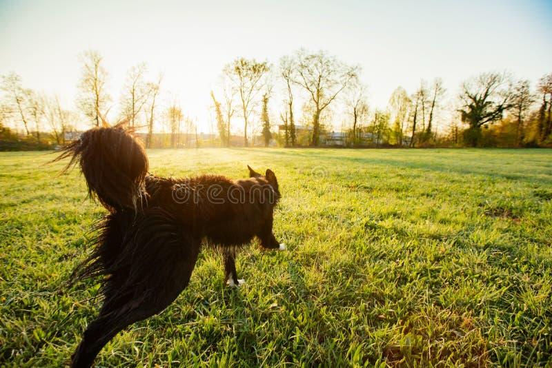 Gioco e funzionamento del cane nel parco della citt? fotografie stock