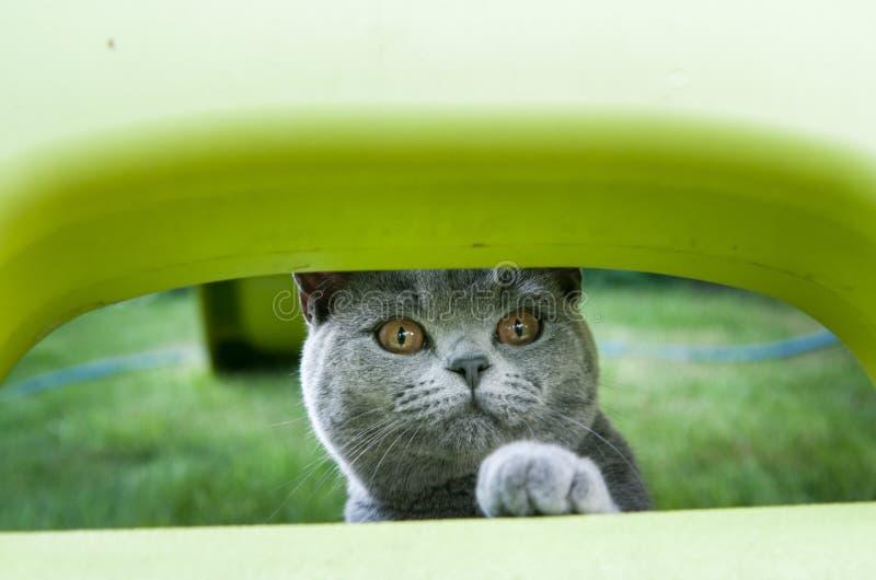 Gioco esterno del gatto domestico nel fondo della natura immagini stock