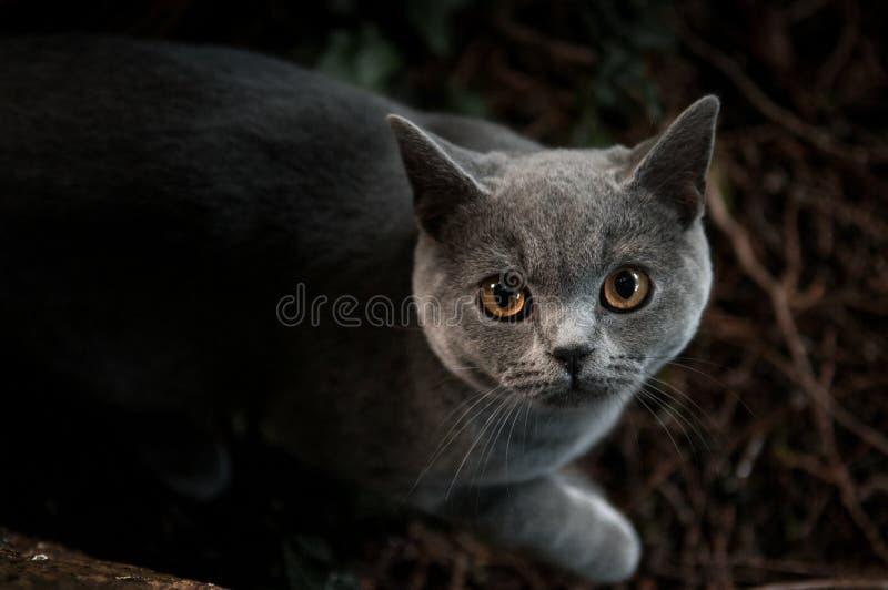 Gioco esterno del gatto domestico nel fondo della natura fotografia stock libera da diritti