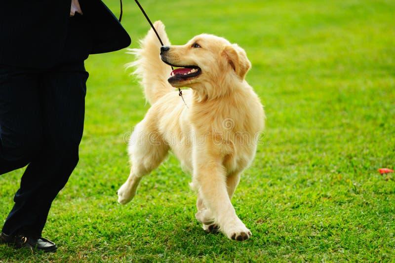 Gioco matrice con il suo cane immagine stock libera da diritti