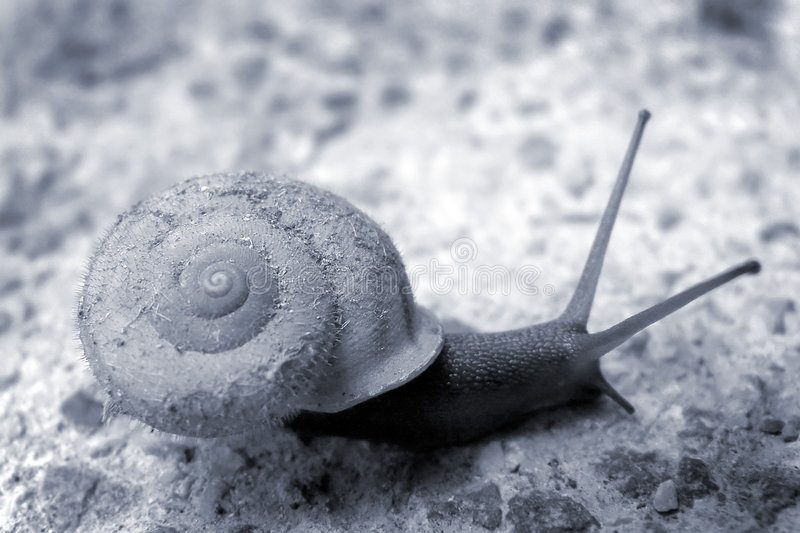 Download Gioco veloce immagine stock. Immagine di spirale, mare - 212167