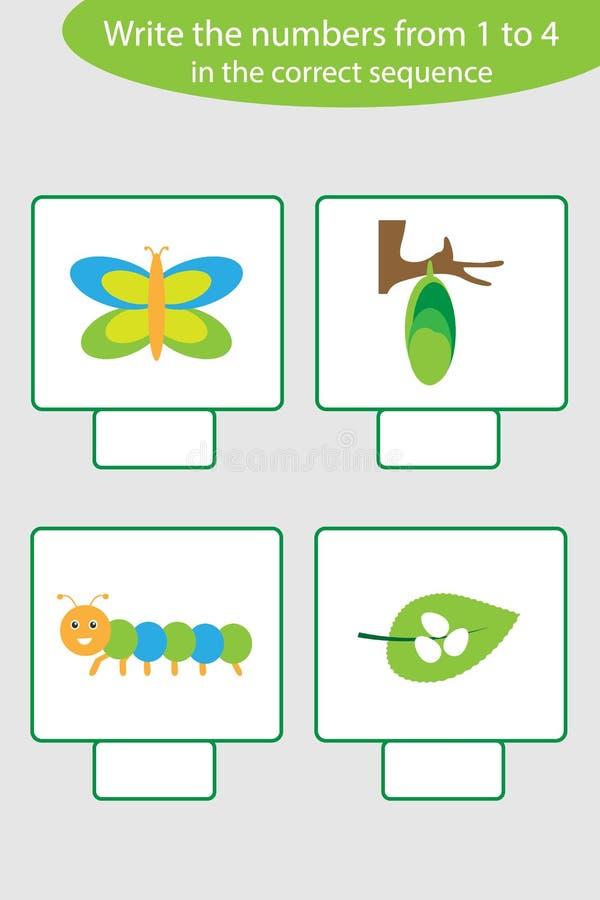 Gioco visivo con il ciclo di vita delle immagini della farfalla per i bambini, compito educativo per lo sviluppo di pensiero logi illustrazione vettoriale