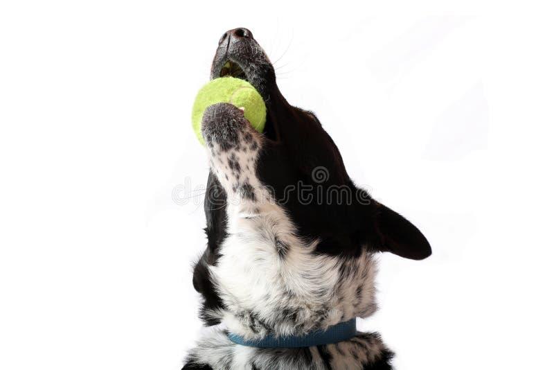 Gioia della palla fotografie stock