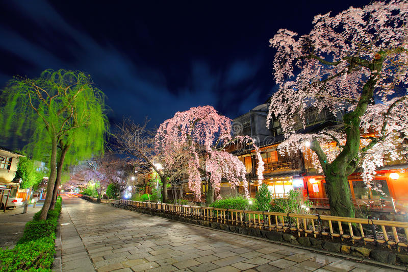 Gion in Kyoto with sakura tree. At night stock image