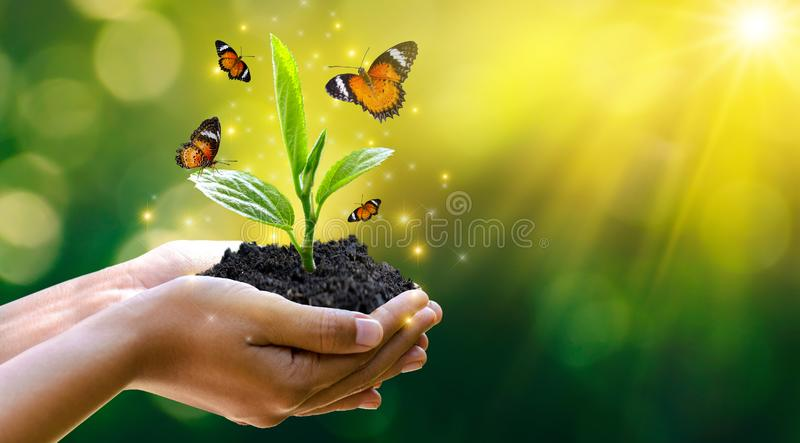Giornata per la Terra dell'ambiente nelle mani degli alberi che crescente le piantine Albero femminile della tenuta della mano de fotografia stock