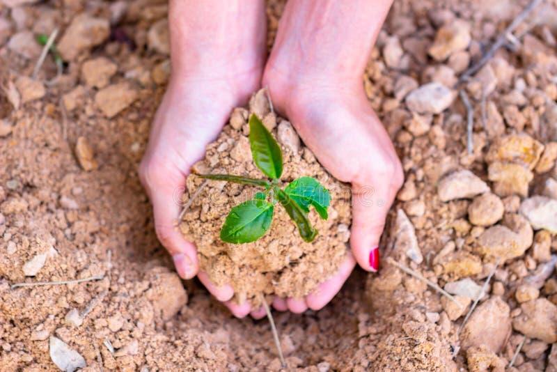 Giornata per la Terra dell'ambiente nelle mani degli alberi che crescente le piantine immagine stock
