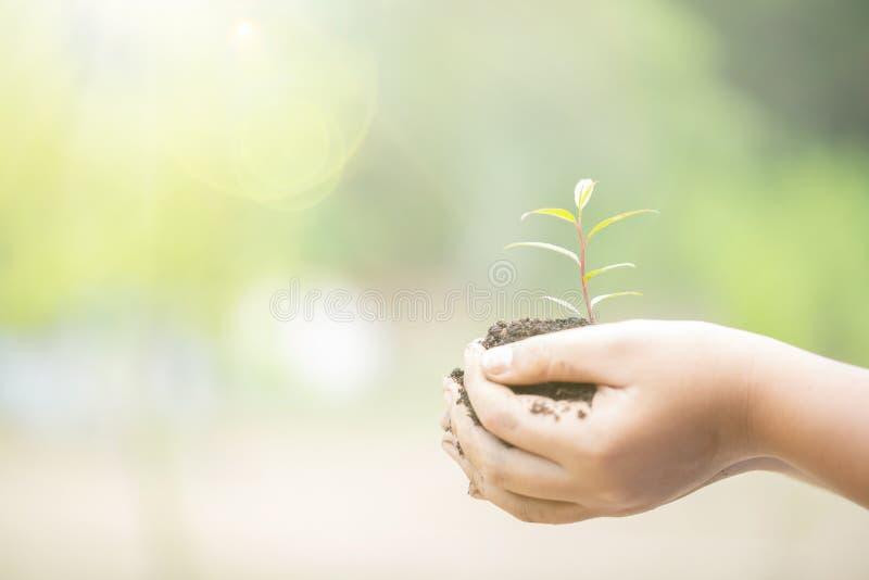 Giornata per la Terra nelle mani degli alberi che crescente le piantine Albero femminile della tenuta della mano sull'erba del gi fotografia stock