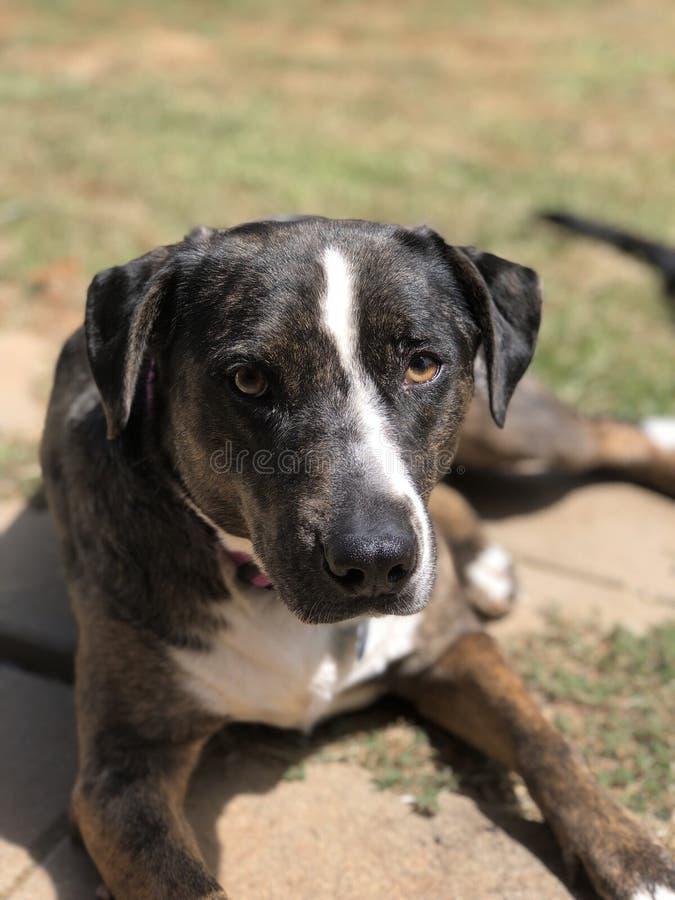 Giorni canini fotografia stock