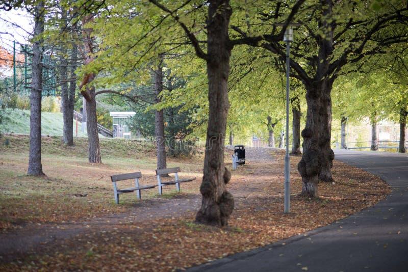 Giorno brillante di autunno in parco fotografia stock libera da diritti