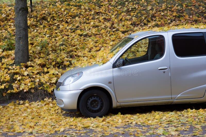 Giorno brillante di autunno in parco immagine stock