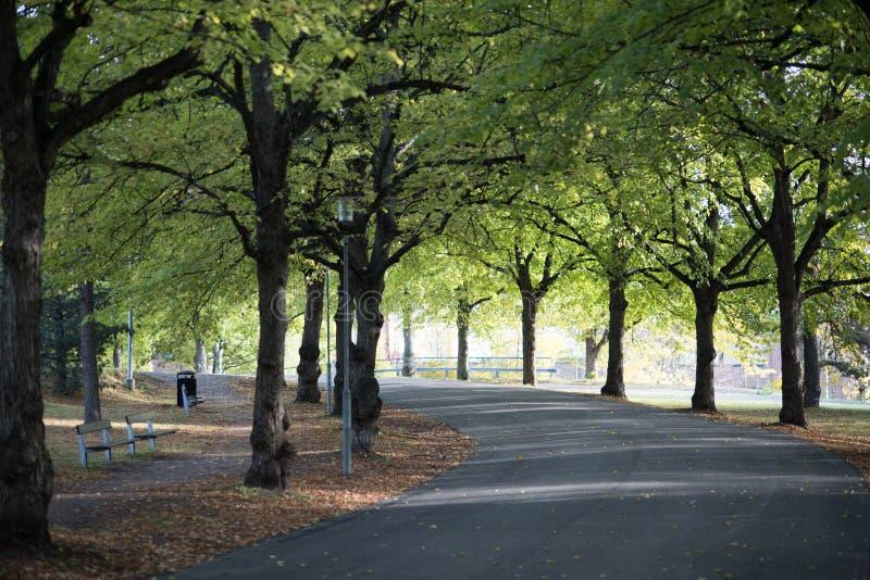 Giorno brillante di autunno in parco immagini stock libere da diritti