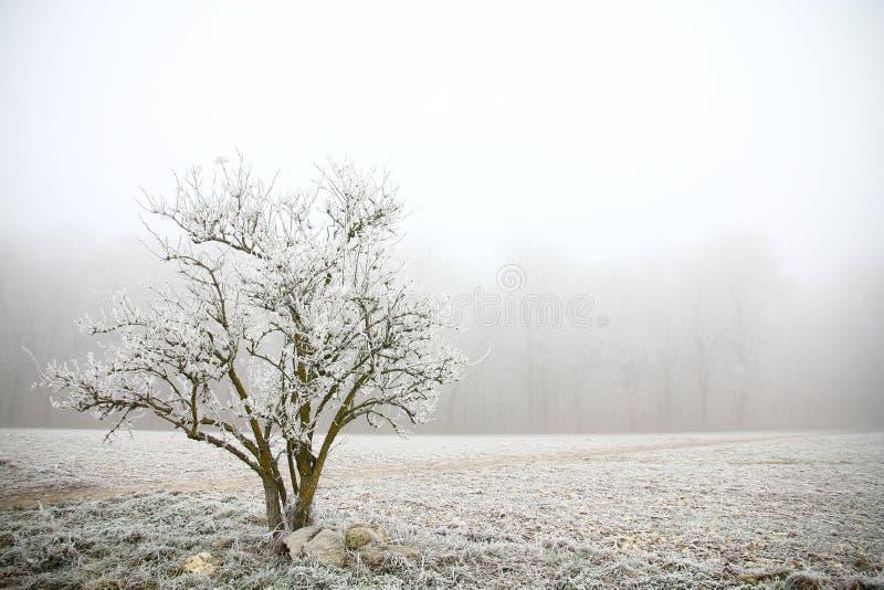 Giorno del gelo immagini stock libere da diritti
