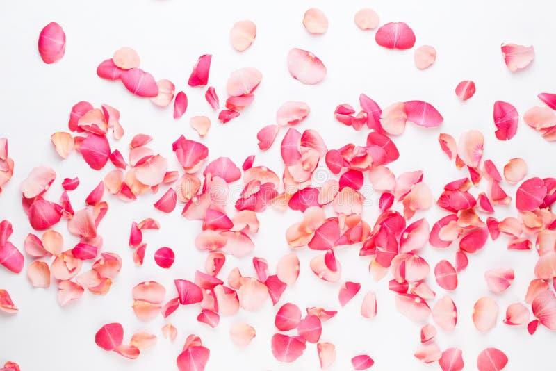 Giorno del `s del biglietto di S Petali dei fiori di Rosa su fondo bianco Fondo di giorno di biglietti di S Disposizione piana, v fotografia stock