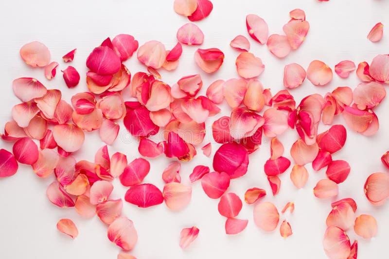 Giorno del `s del biglietto di S Petali dei fiori di Rosa su fondo bianco Fondo di giorno di biglietti di S Disposizione piana, v immagini stock