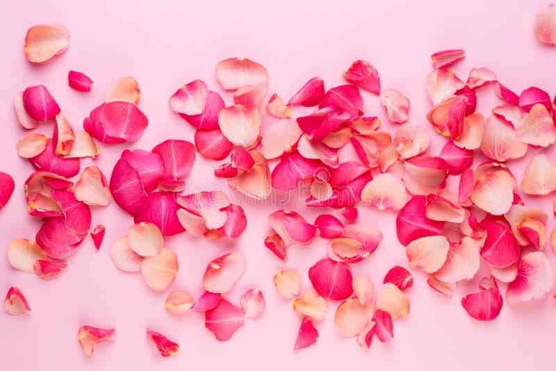 Giorno del `s del biglietto di S Petali dei fiori di Rosa su fondo bianco Fondo di giorno di biglietti di S Disposizione piana, v fotografia stock libera da diritti