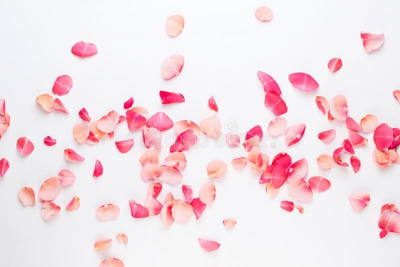 Giorno del `s del biglietto di S Petali dei fiori di Rosa su fondo bianco Fondo di giorno di biglietti di S Disposizione piana, v fotografie stock libere da diritti