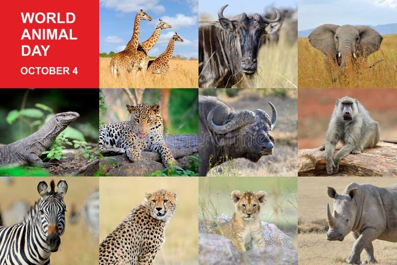 Giorno dell'animale del mondo immagine stock libera da diritti