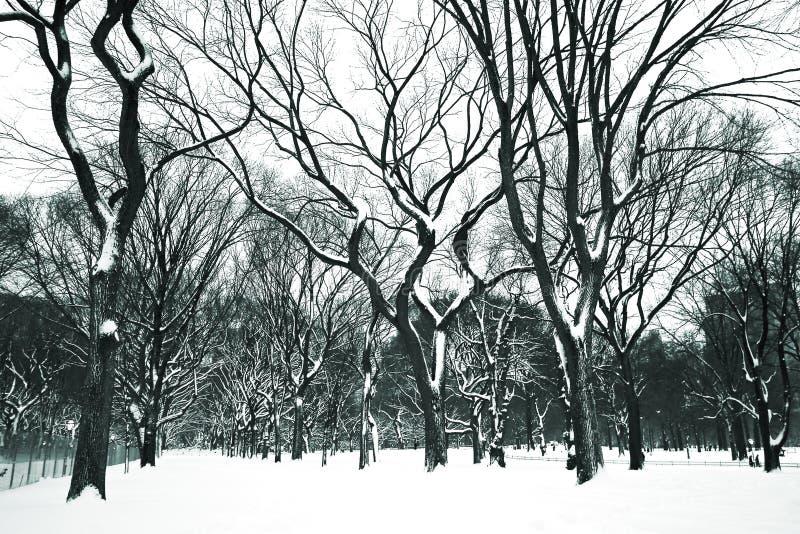 Giorno della neve a Central Park fotografia stock