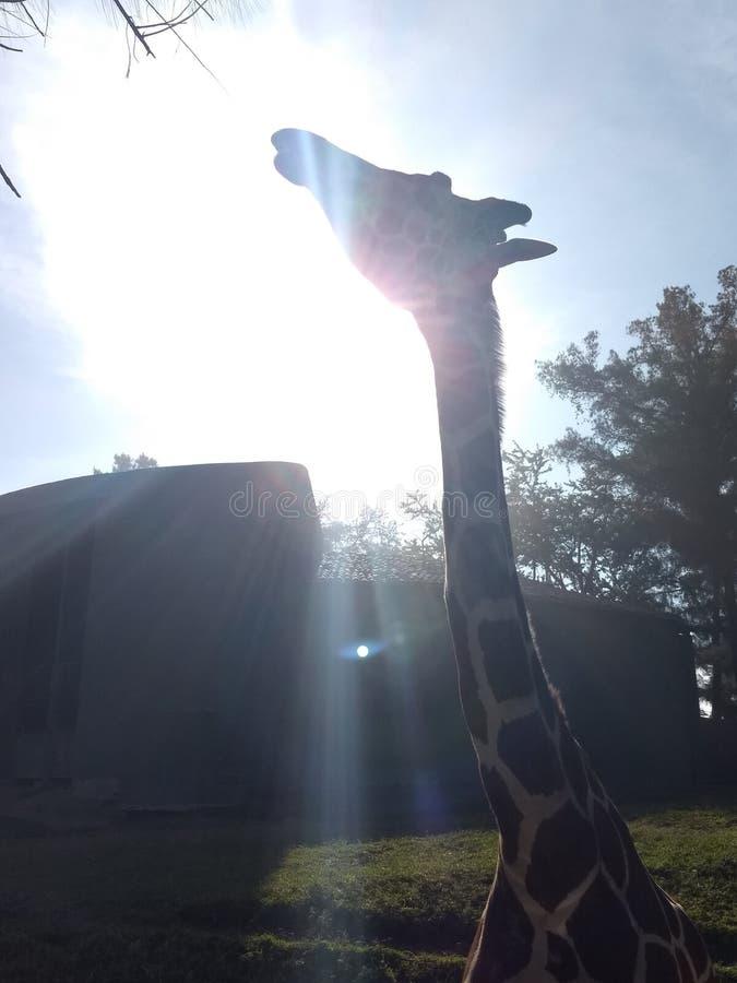 Giorno 1 dello zoo fotografia stock
