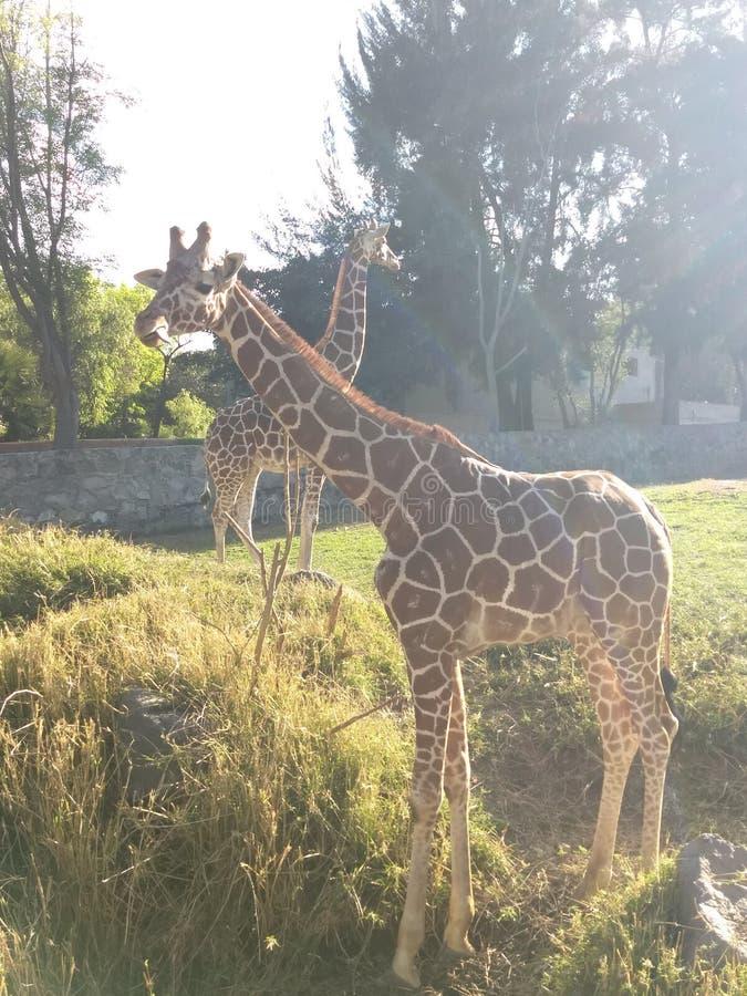 Giorno 1 dello zoo immagini stock