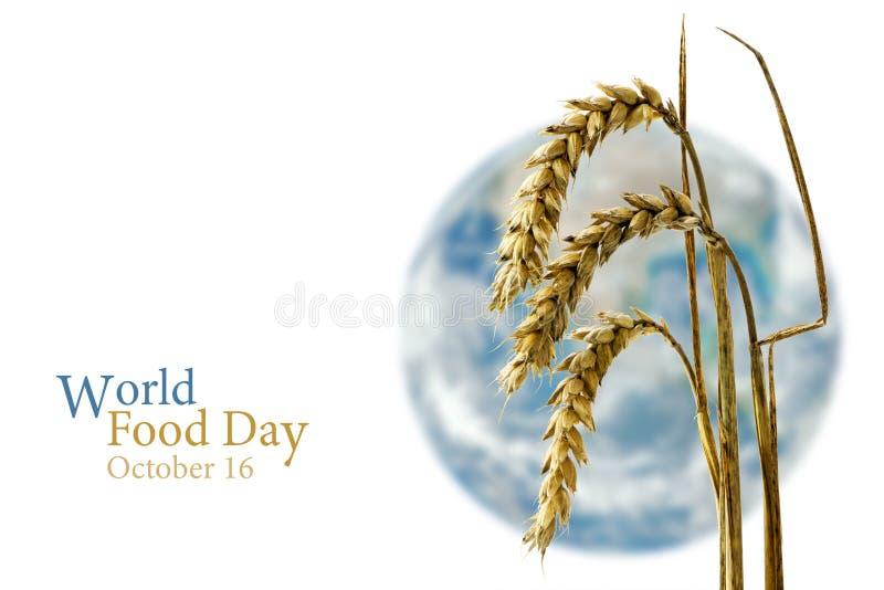 Giorno di alimento di mondo, il 16 ottobre, segale davanti ad un glob vago del mondo immagini stock libere da diritti