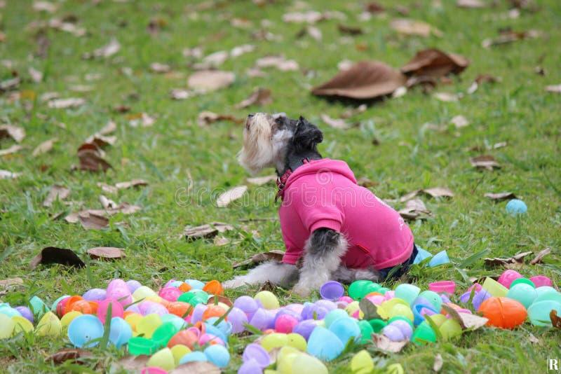 Giorno di cane fotografia stock