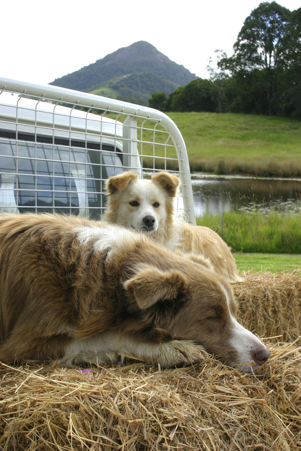 Giorno di cani fuori fotografie stock libere da diritti