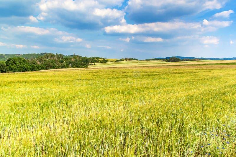 Giorno di estate caldo nella campagna Campo verde a giugno Paesaggio agricolo in repubblica Ceca immagine stock