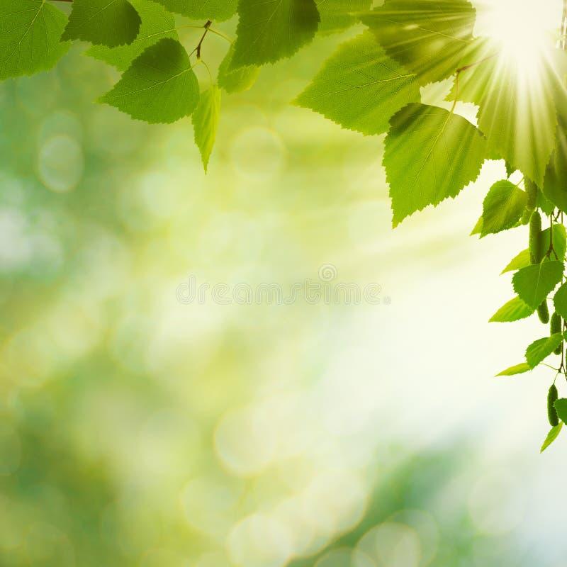 Giorno di estate di bellezza. fotografia stock