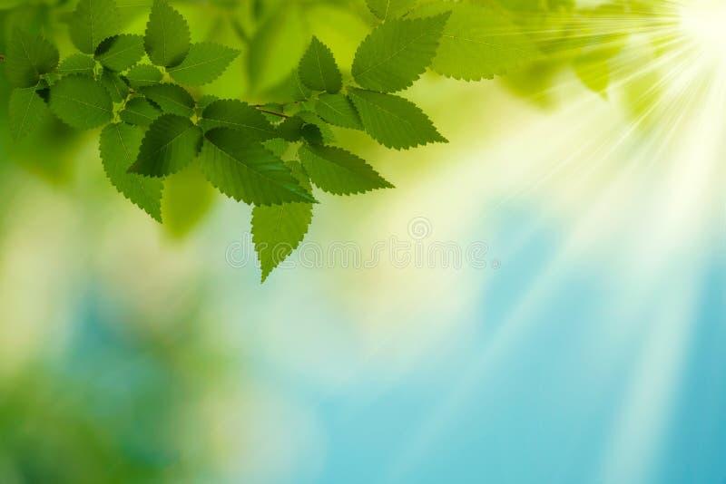 Giorno di estate di bellezza. immagine stock