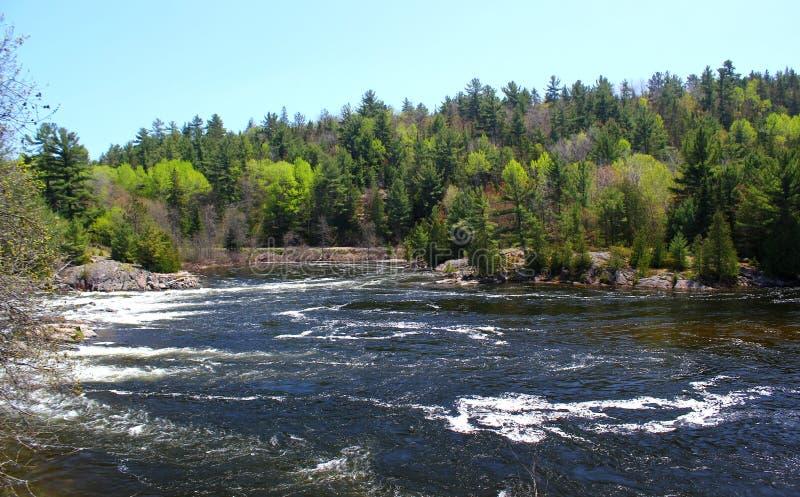 Giorno di estate meraviglioso: Bello lago in Ontario fotografia stock libera da diritti