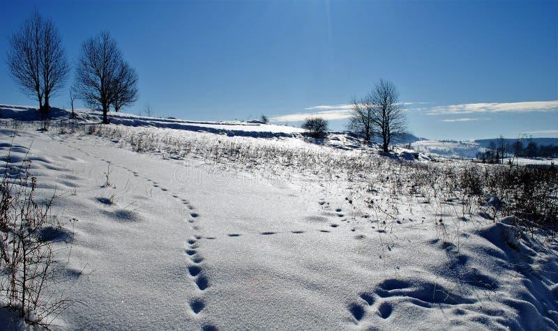 Giorno di inverno meraviglioso fotografia stock libera da diritti