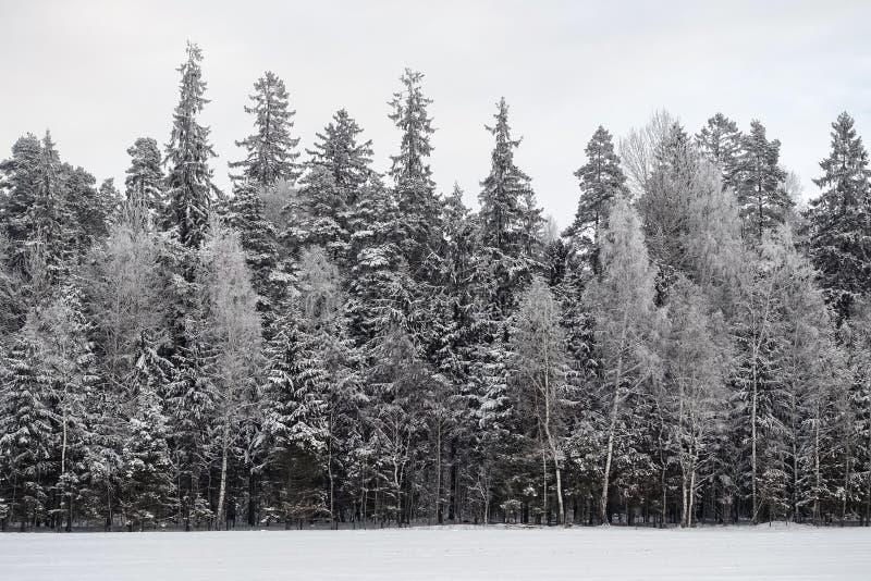 giorno di inverno scuro nuvoloso senza sole immagini stock