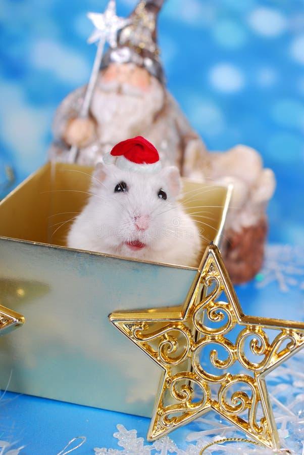 Giorno di Natale, finalmente fotografie stock libere da diritti