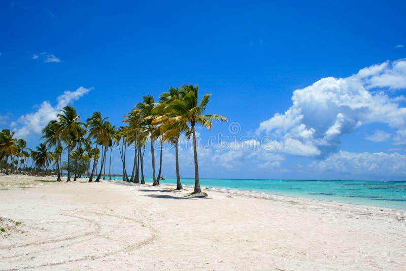 Giorno di rilassamento sotto le palme sulla spiaggia caraibica fotografie stock libere da diritti
