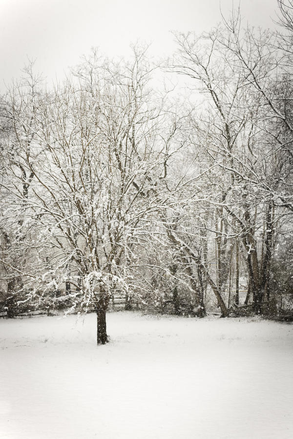 Giorno di Snowy fotografia stock libera da diritti