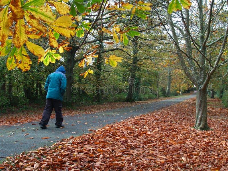 Giorno freddo di autunno immagine stock