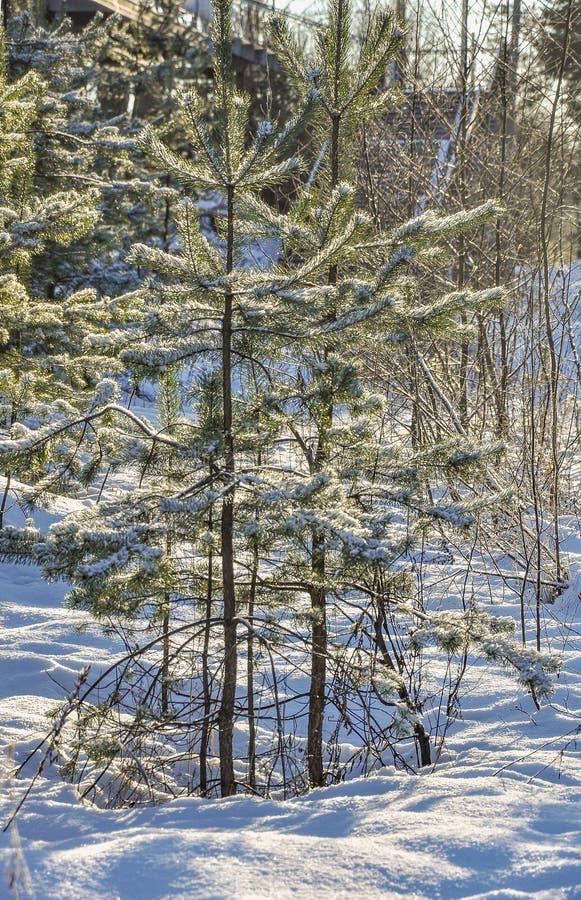 Giorno gelido di inverno soleggiato Strada di inverno alla piattaforma ferroviaria fotografia stock libera da diritti