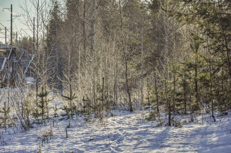 Giorno gelido di inverno soleggiato Strada di inverno alla piattaforma ferroviaria immagine stock