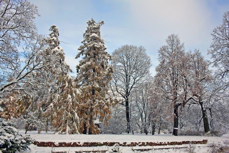 Giorno innevato del parco a novembre fotografie stock
