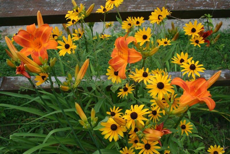 Giorno Lillies e margherite gialle immagini stock libere da diritti