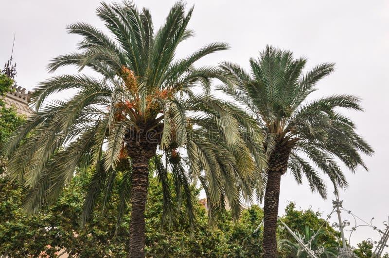 Giorno nebbioso, colori verdi ed arancio - i rami di due alberi del cocco si avvicinano ad Arc de Triomf a Barcellona Spagna immagine stock
