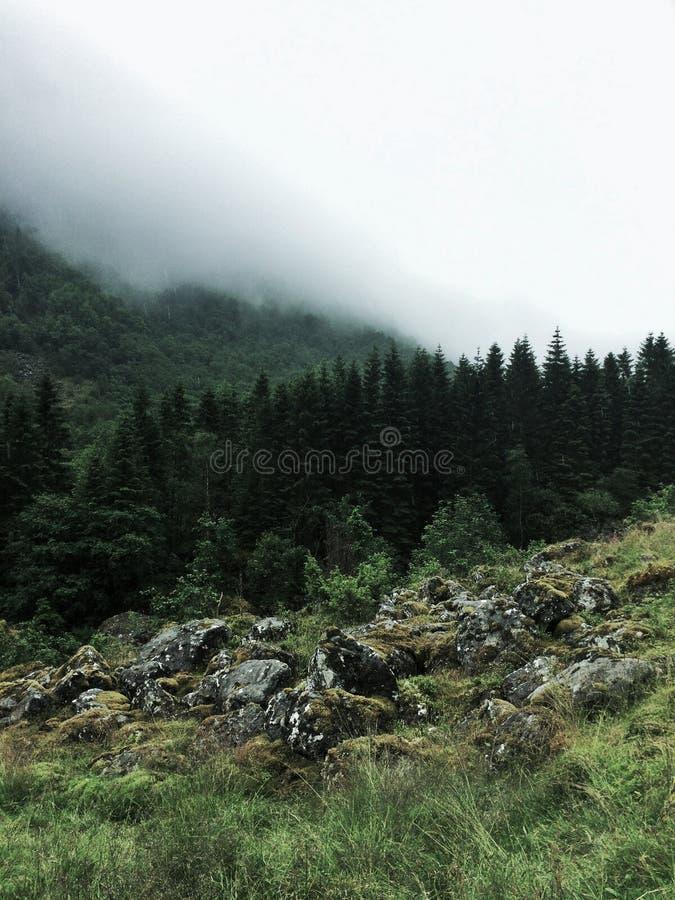 Giorno nebbioso in Norvegia fotografia stock